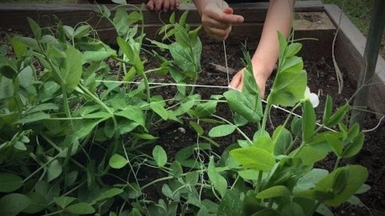 FoodCorps Uses Nature to Nurture School Skills