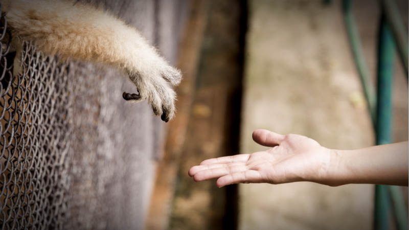 You Want to Help Animals, But How? - giving compass - animal welfare