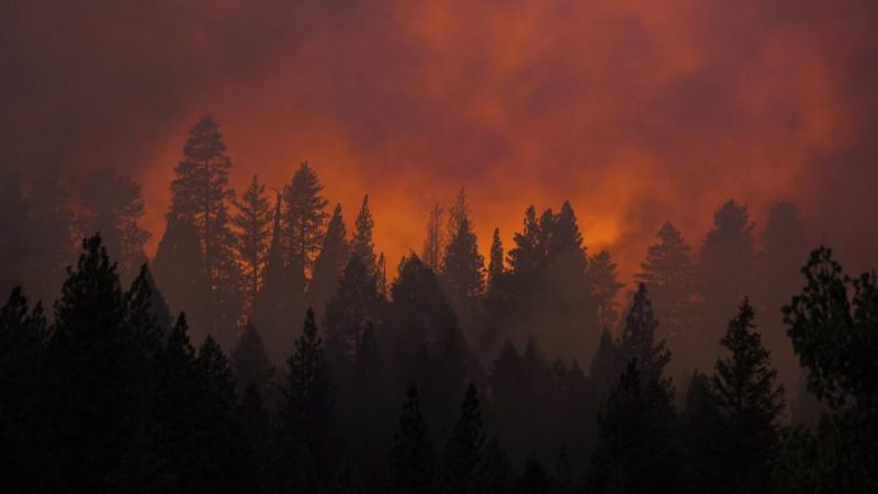 Wildfires May Be More Toxic Than Scientists Thought
